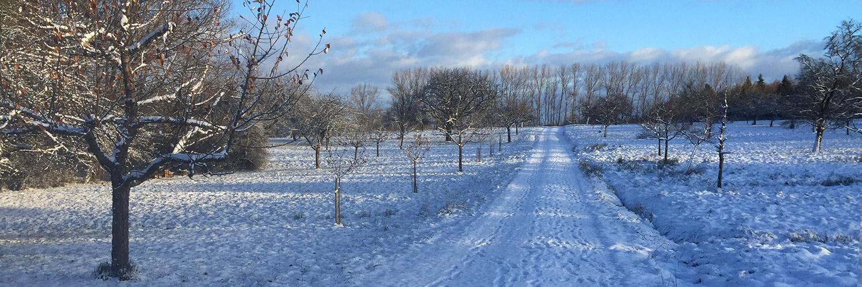 Slider-Winter_1500x500